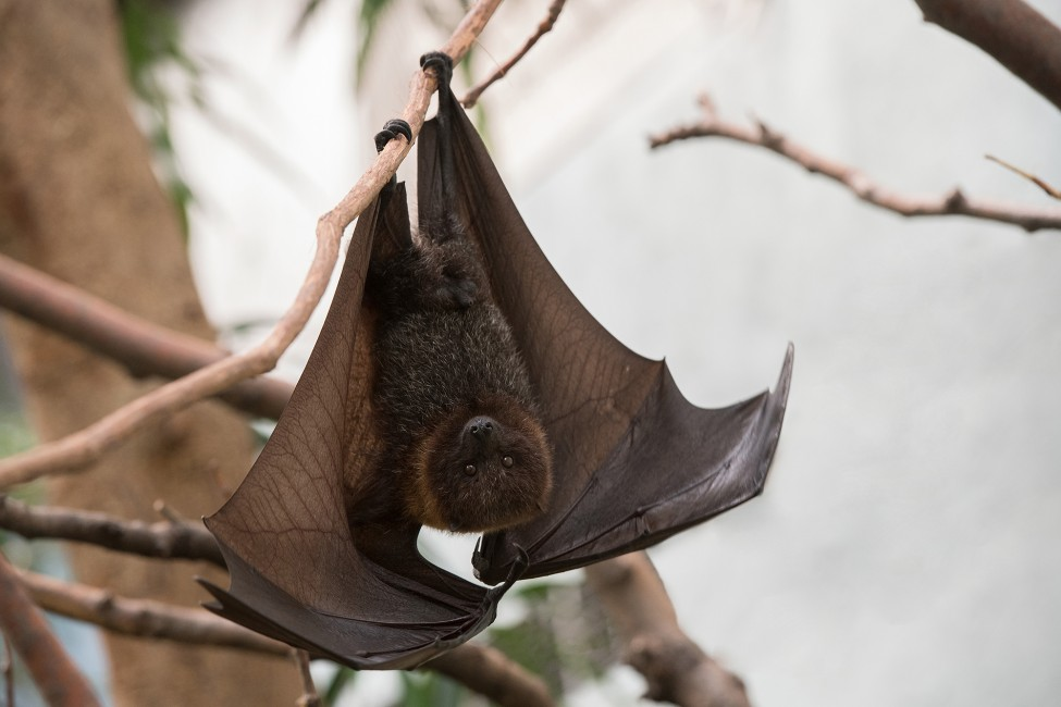 Bats on the Brink – But Not in the Bronx