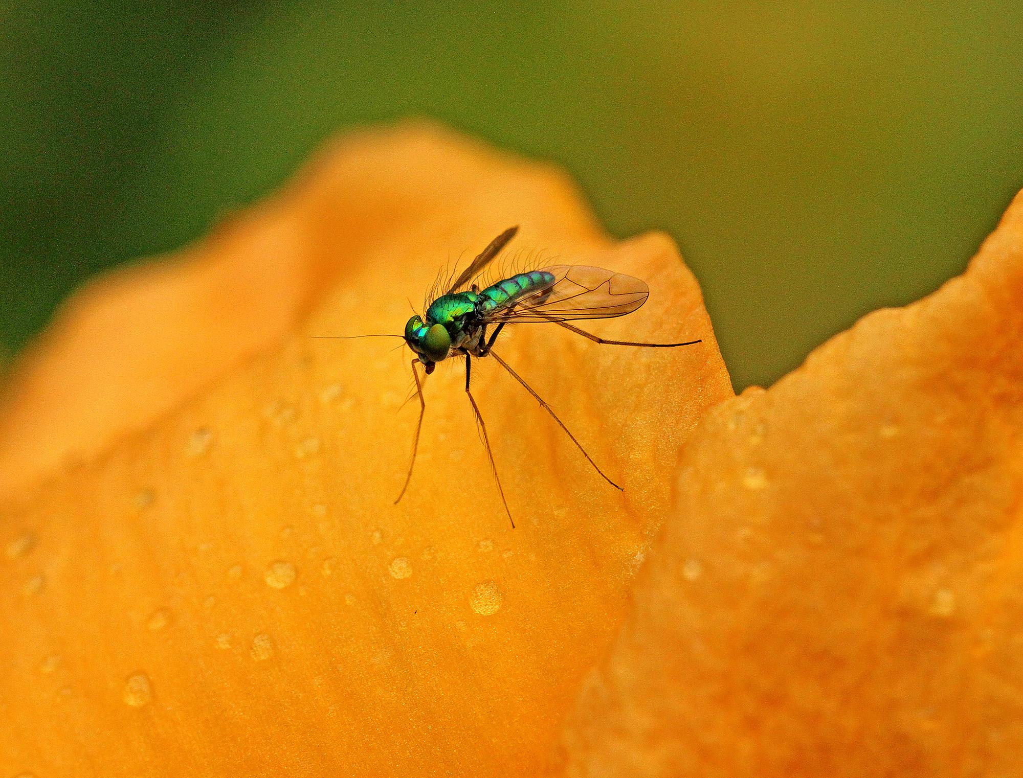 A Friendly Fly