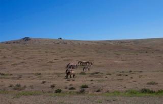 Seen and Herd