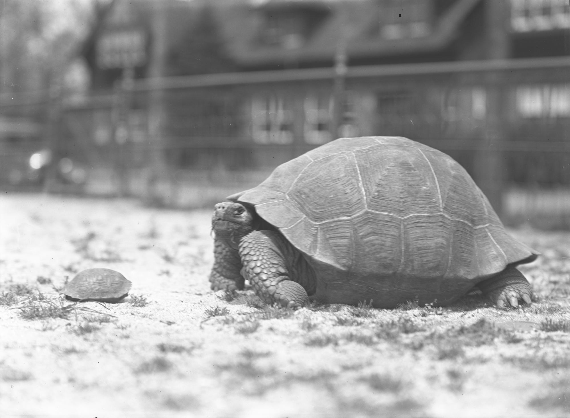 Stars of Tortoise Conservation History