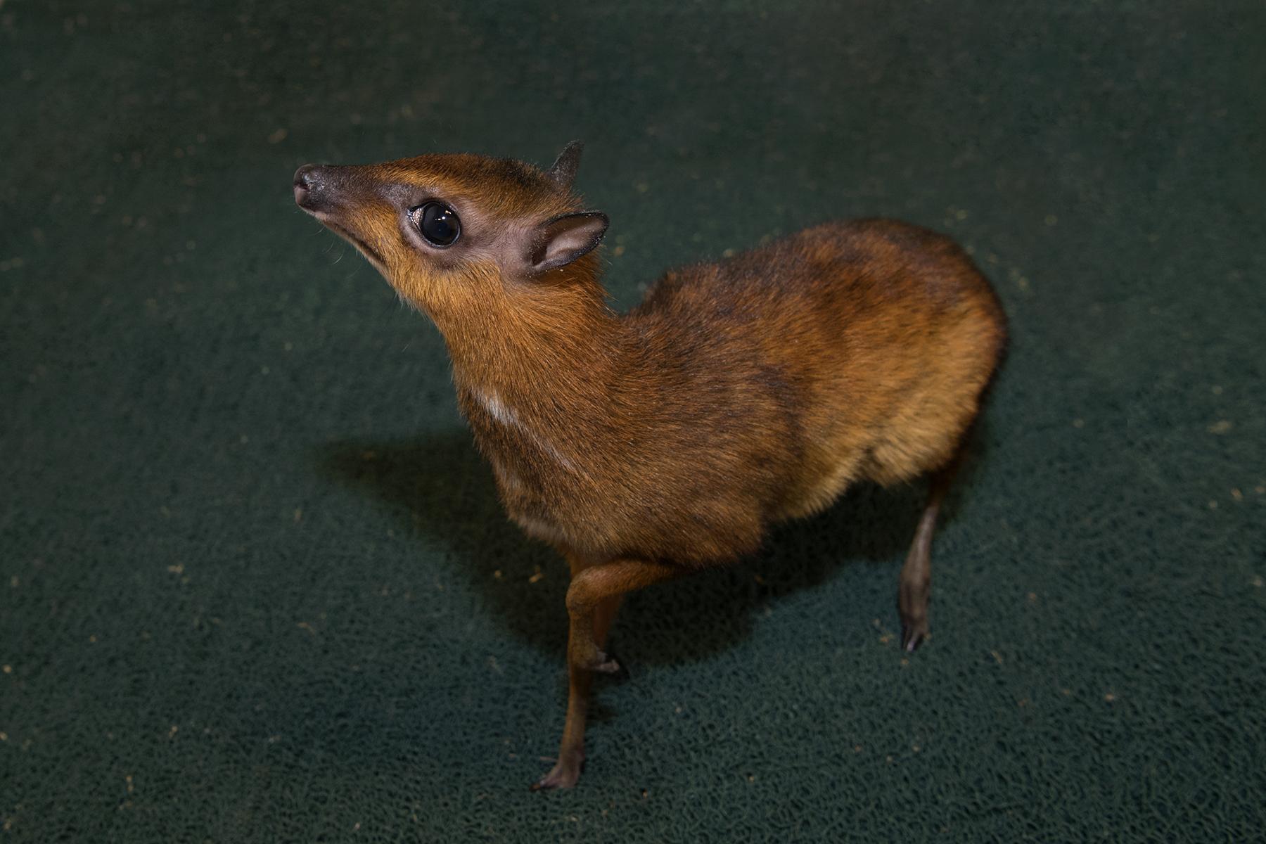 Is it a Mouse? Is it a Deer?