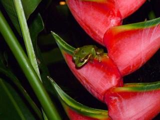 Tree Frog Wardrobe Change