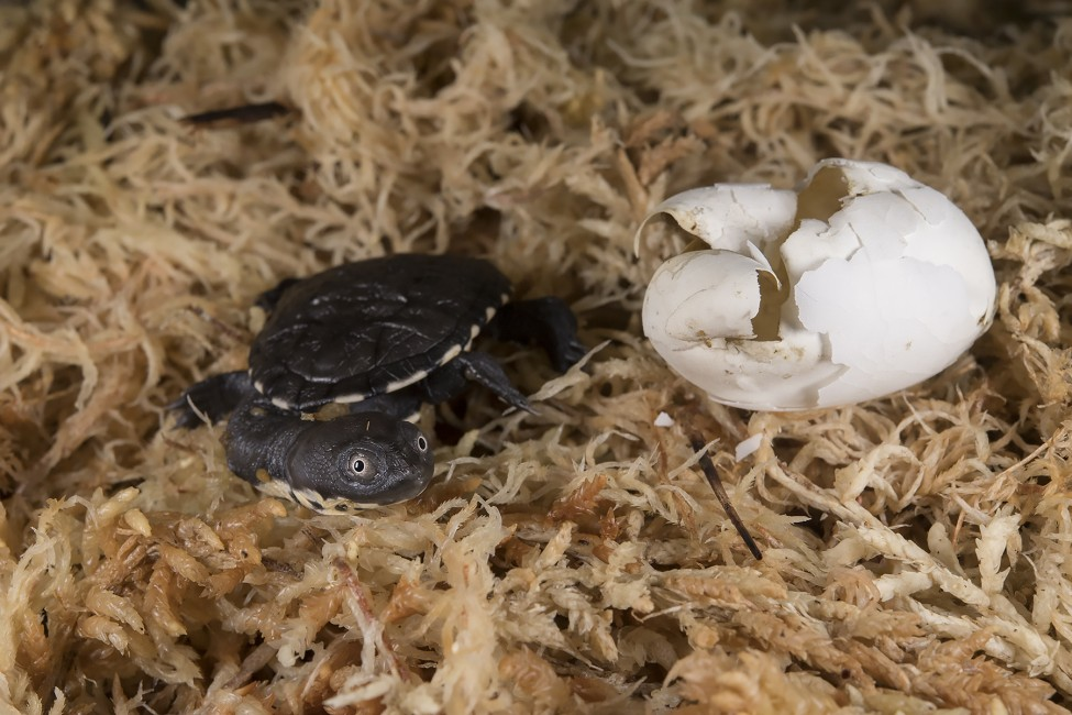Welcome, Turtle Hatchling