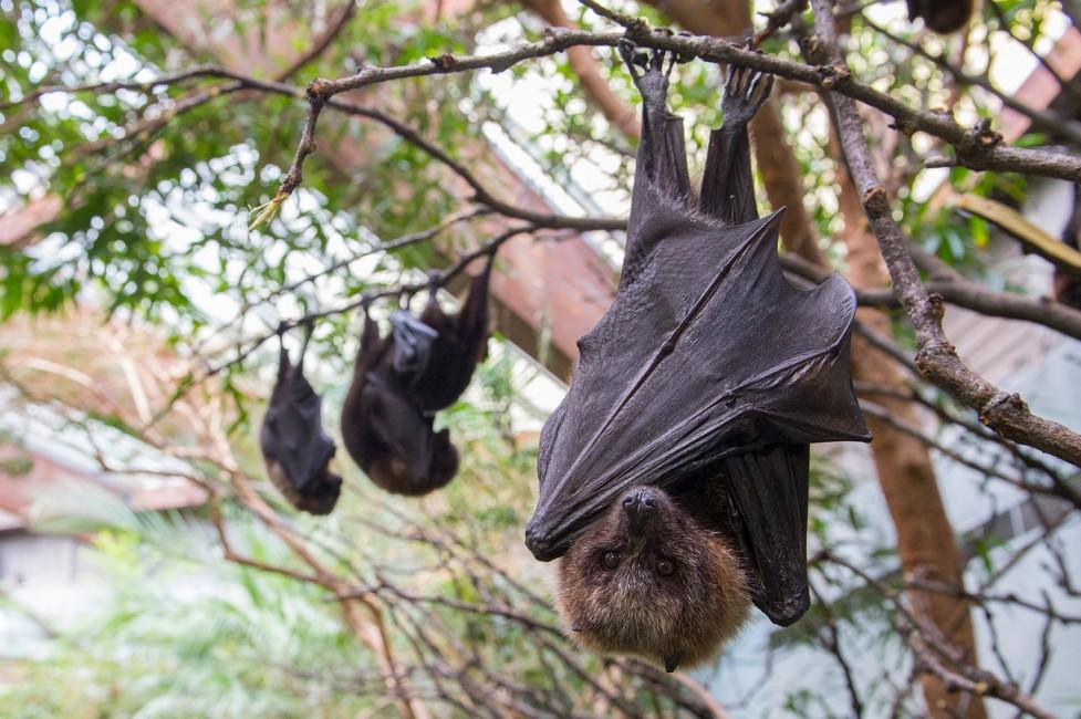 Bat Heroes