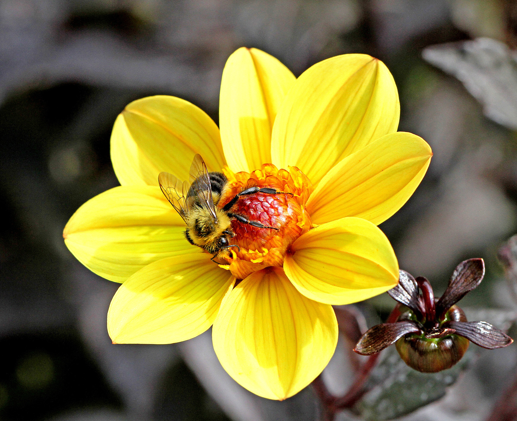 Blooms and Bees