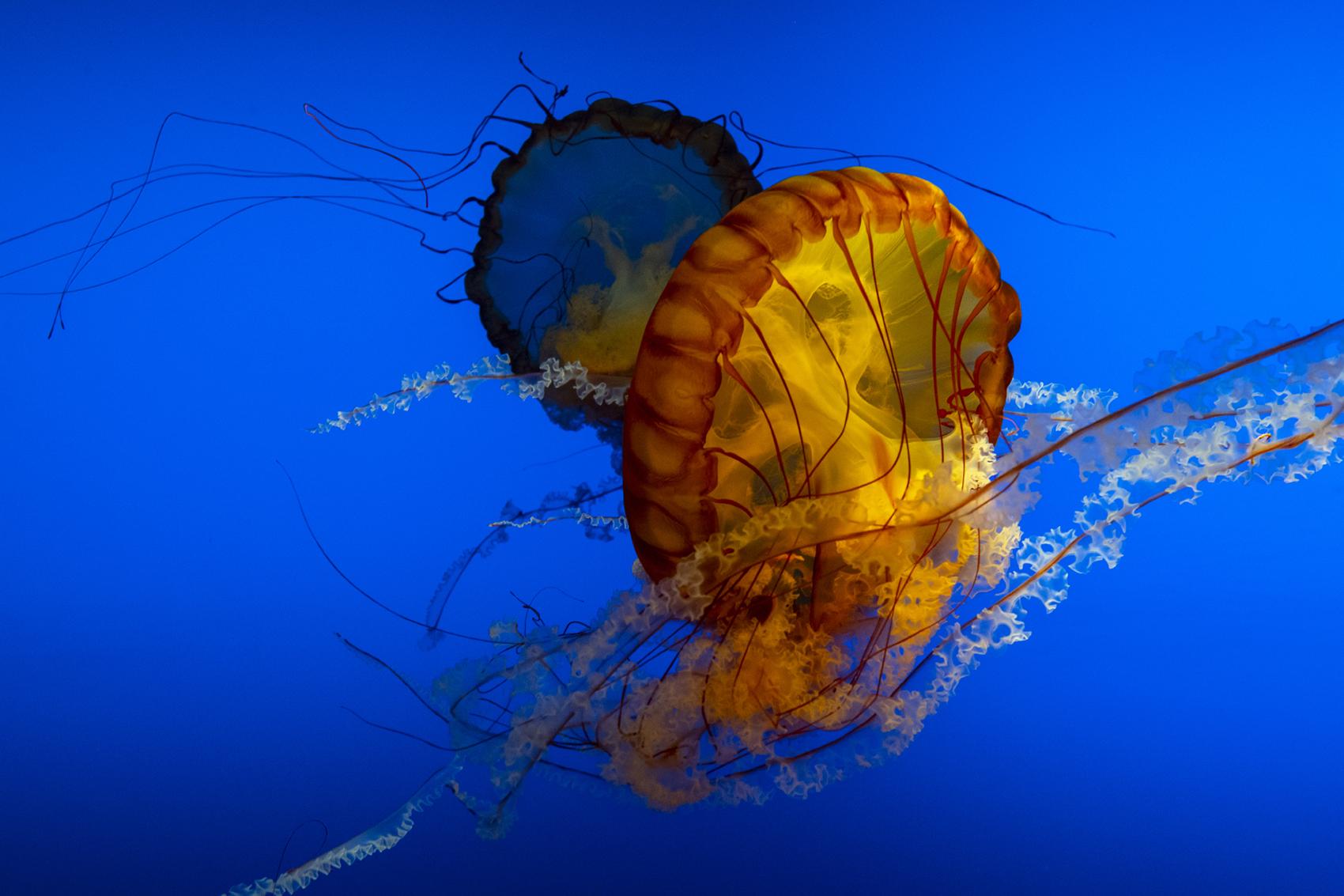 Underwater Umbrellas