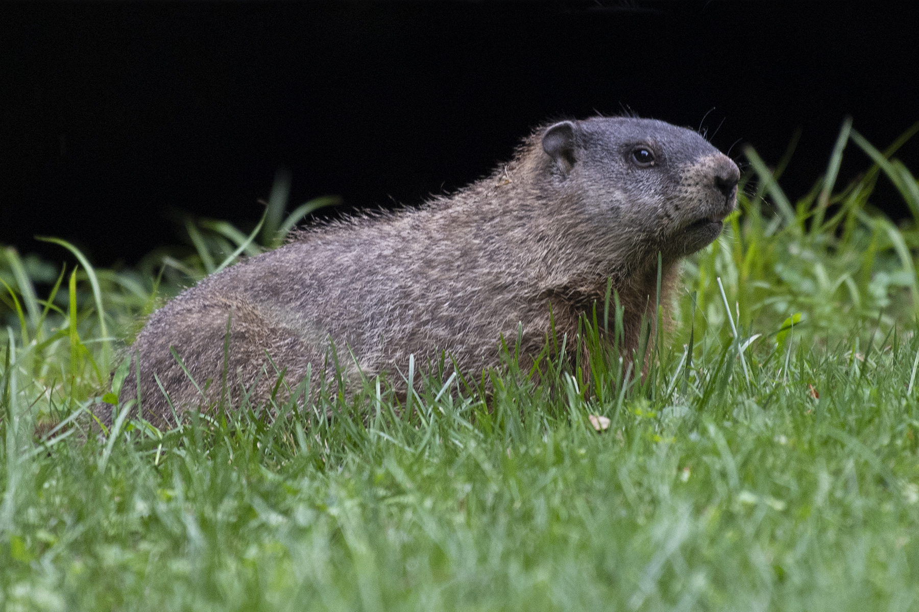 You Can Call Me … Groundhog?