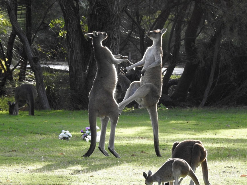 Kickboxing Down Under