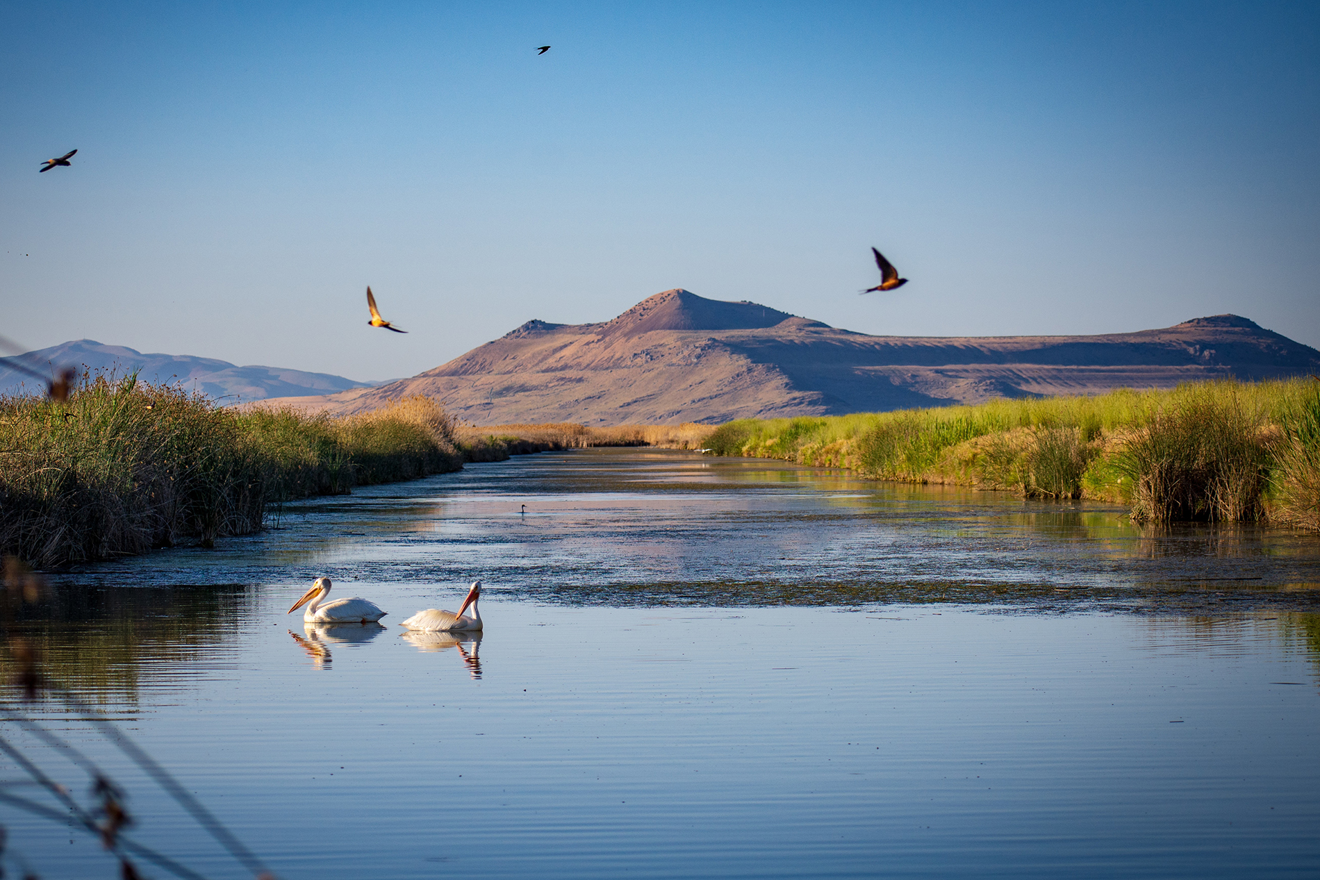 The Beauty of Bear River Bird Refuge