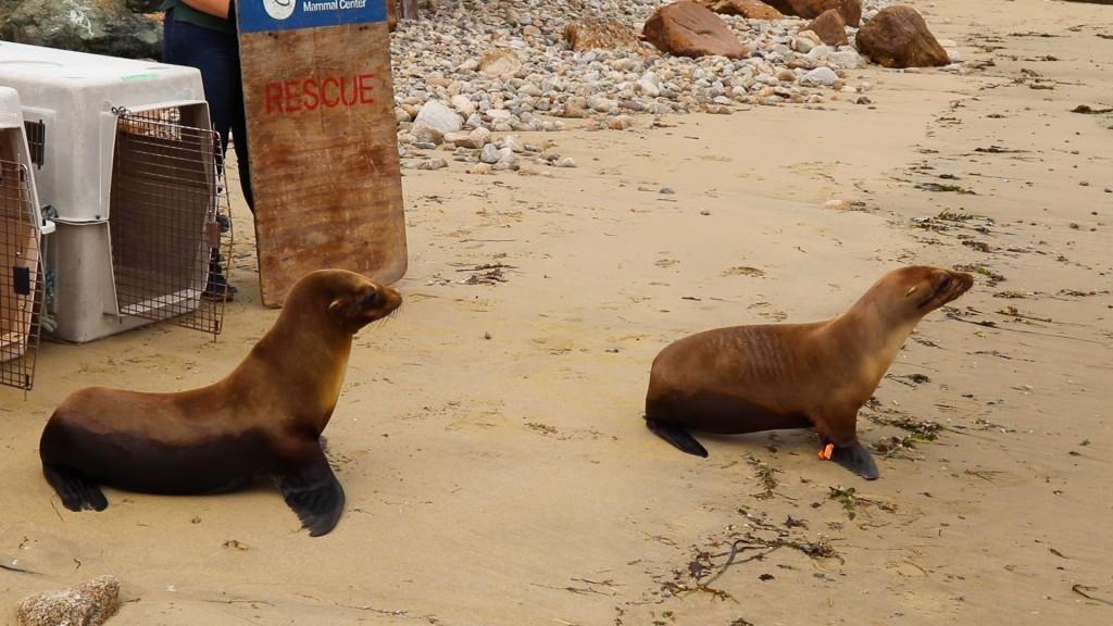 Saving Sea Lions and Seals