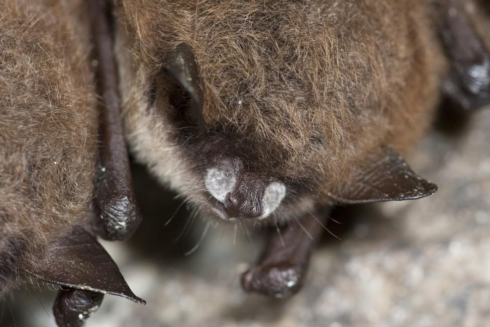 Bringing Bats into the Light