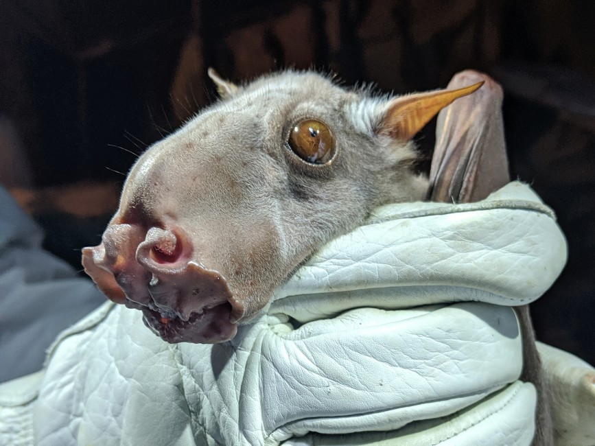 Discovering Where Bats Go in Africa