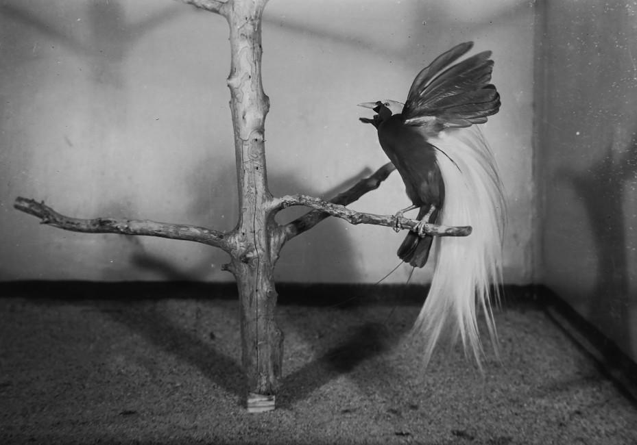 Edward R. Osterndorff: Outstanding Achievement in Bird Photography