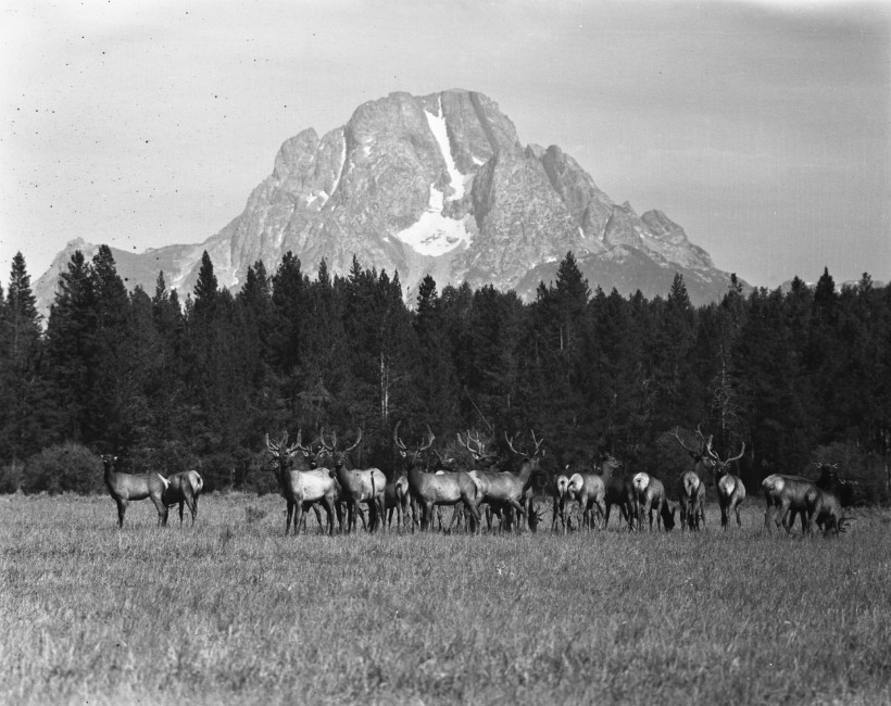Looking Back: Jackson Hole Wildlife Park in 1948