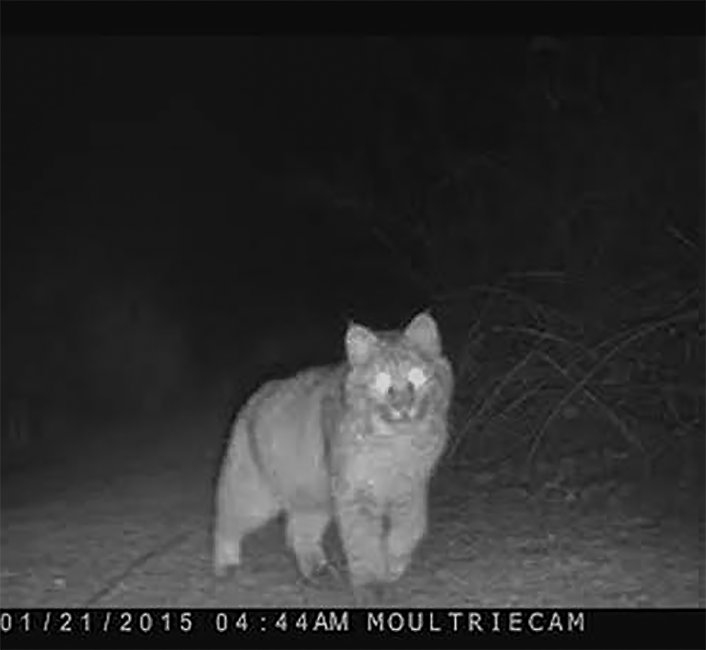Critter Cam in Connecticut
