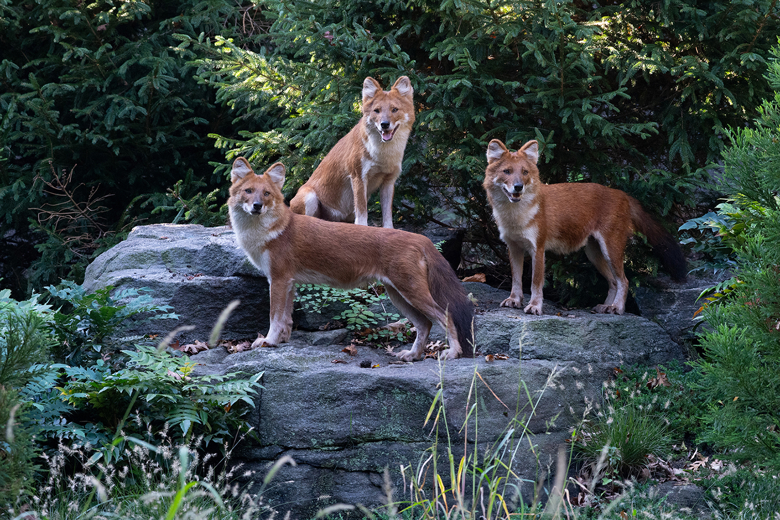 A Dhole New World
