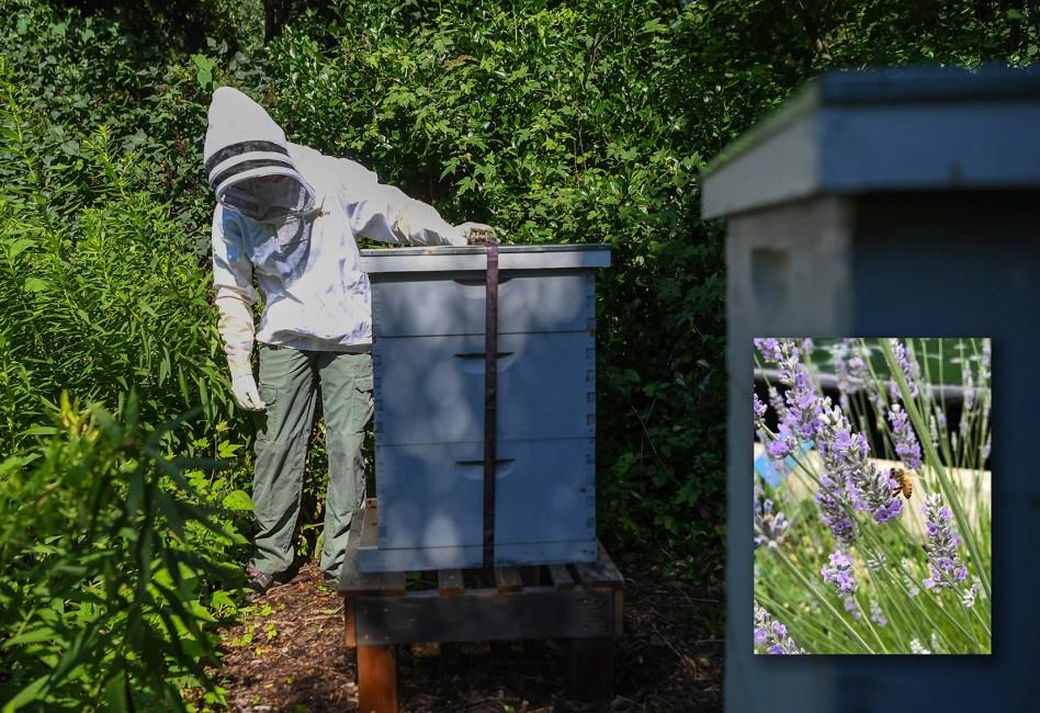 Honeybee Waggle Dance