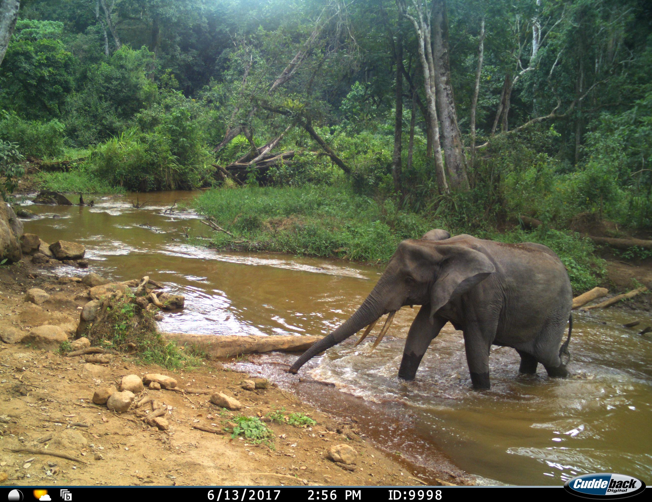 When Elephants are Near
