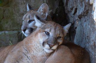 Snap! Animal Pairs