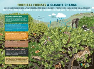 Protecting Tropical Forests Protects Us