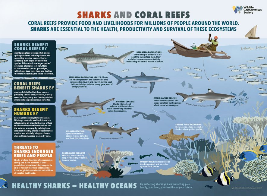 How Sharks Help Keep Coral Reefs Healthy