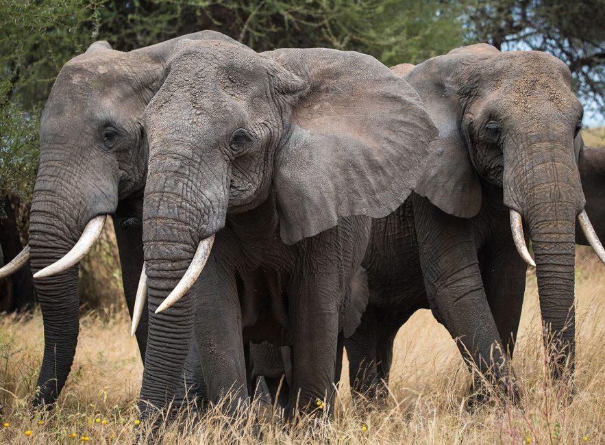 Elephant Enigmas