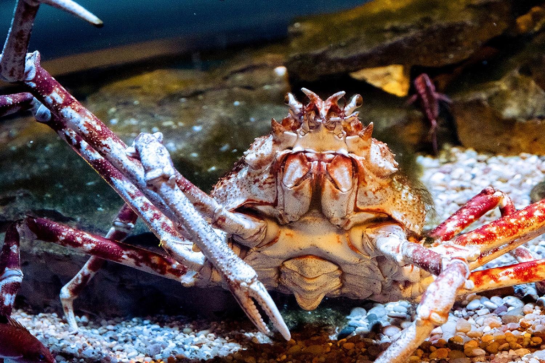 A Super Sea Creature