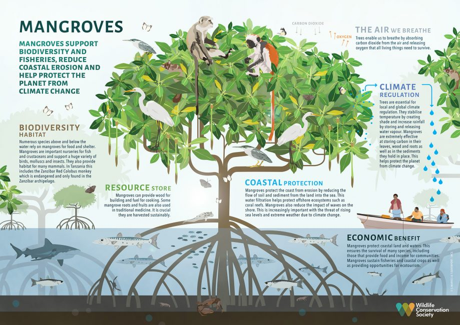 The Value of Mangroves