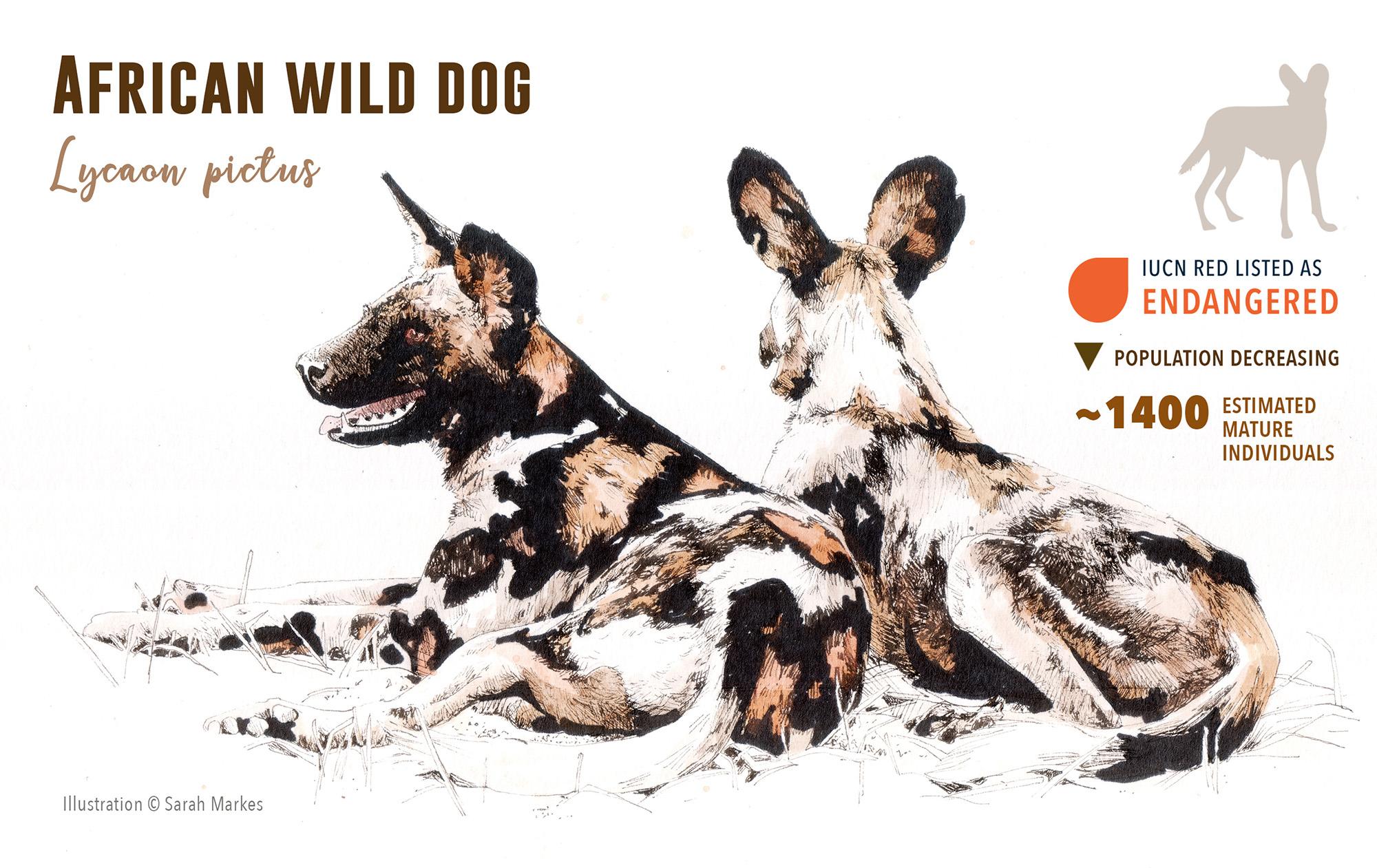 Protecting Tanzania's Wild Dogs