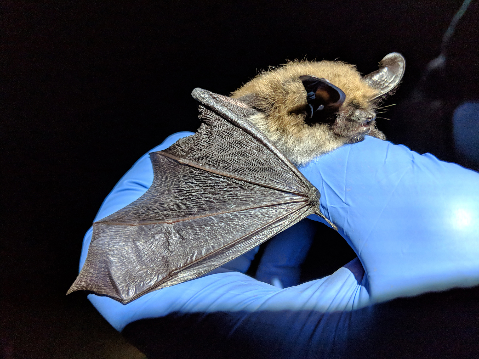 Evolution's Sublime Bat Wing